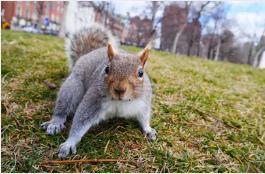 Dallas squirrel control