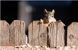 Forth Worth squirrel control