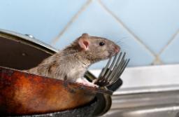 Plano rat control