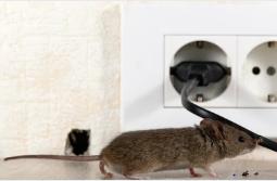 San Antonio mice control