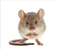 San Antonio mouse control