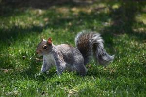 Houston squirrel control