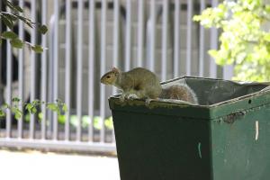 San Antonio squirrel control